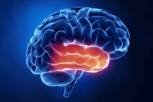 Temporal Lobe Brain Injuries